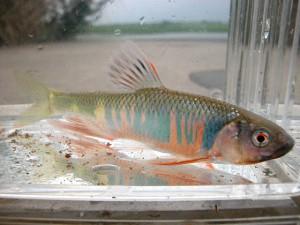 fish1904